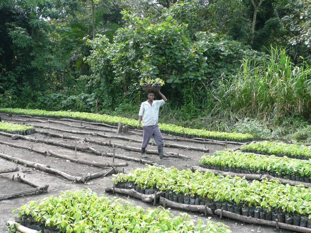 Uganda Kibale - locally owned tree nursery (1)